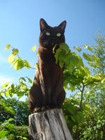 Азиатская кошка на дереве