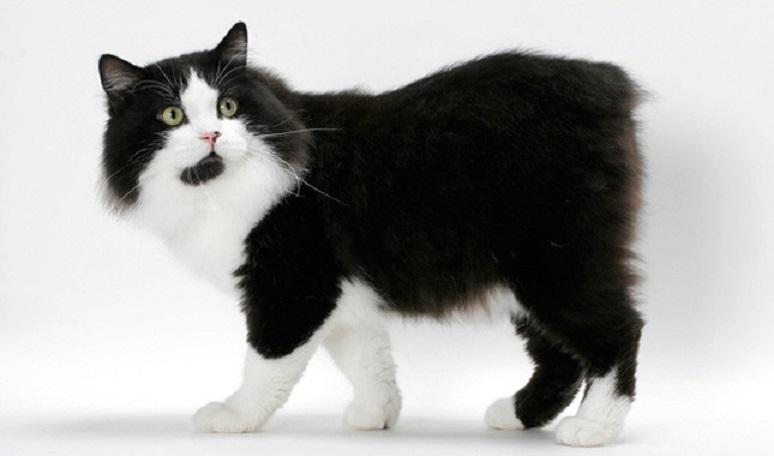 картинка черно белая кот