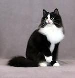 Черно-белый Рагамаффин