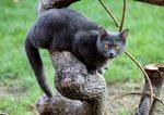 Шартрез сидит на дереве