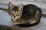 Симпатичная Кипрская кошка