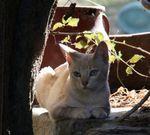 Симпатичный кот Серраде Петит
