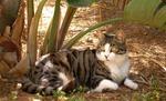 Кипрская кошка на природе