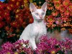 Девон-рекс в цветах