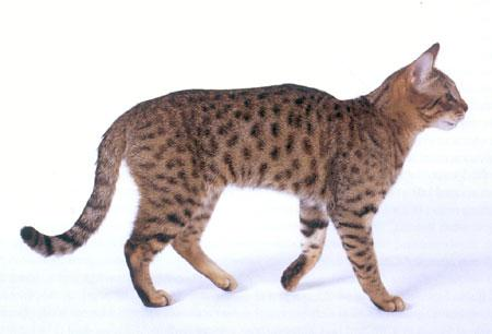 Картинки кота с боку