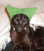 Гавана в зеленой шапке