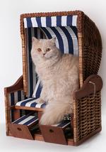 Портрет кота Хайлендер