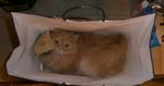 Наполеон в коробке