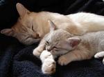 Спящая семья Бурмилла