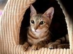 Сококе в домике для кошек